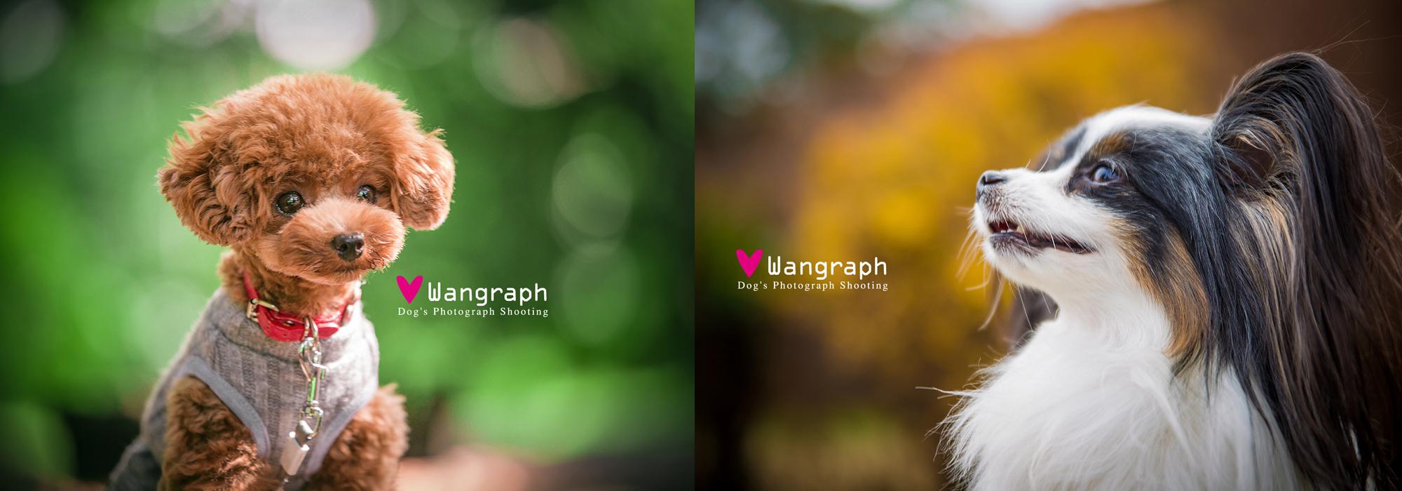Wangraph愛犬撮影・実践カメラ教室